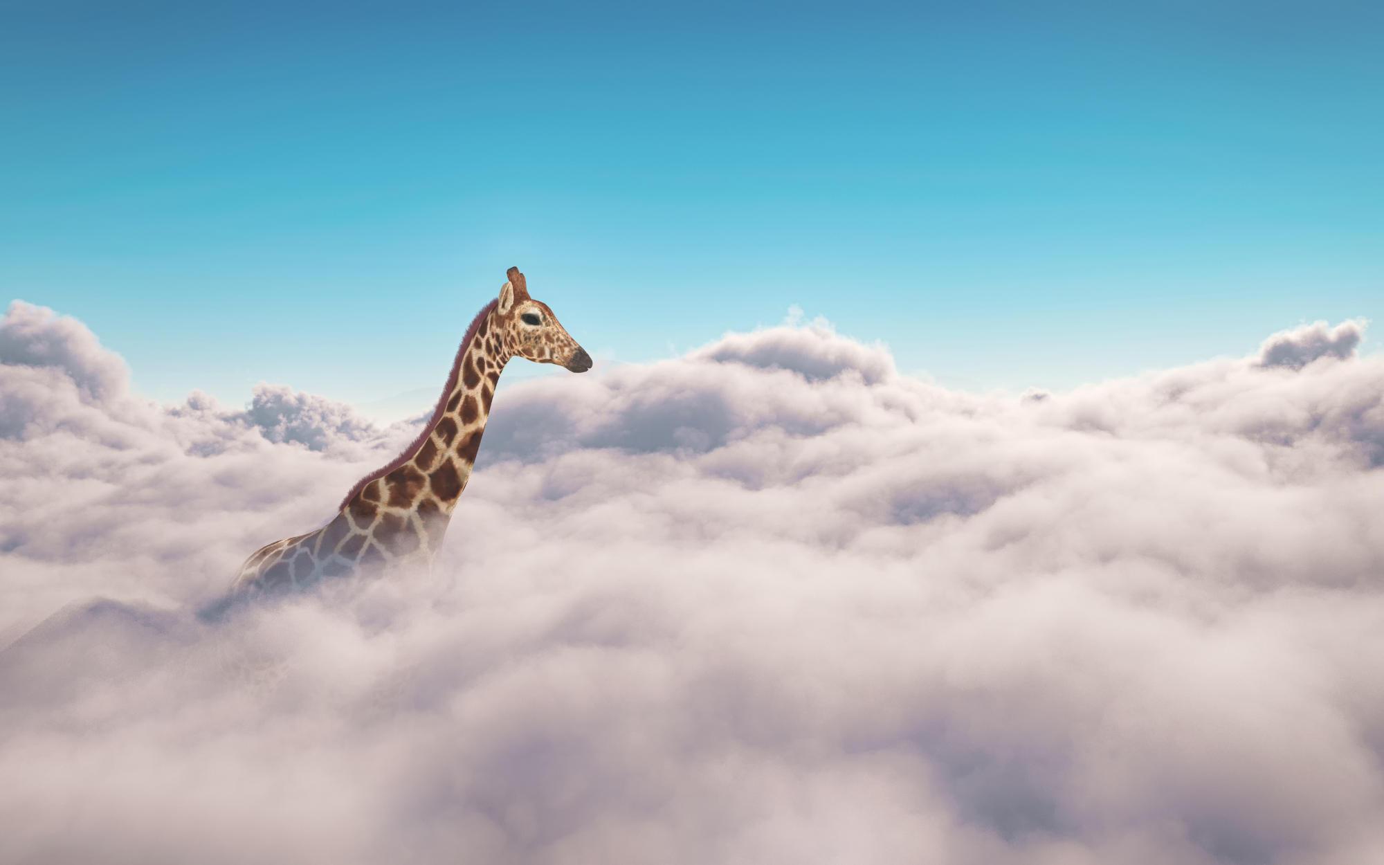 Cloud Services Header - Giraffe in den Wolken
