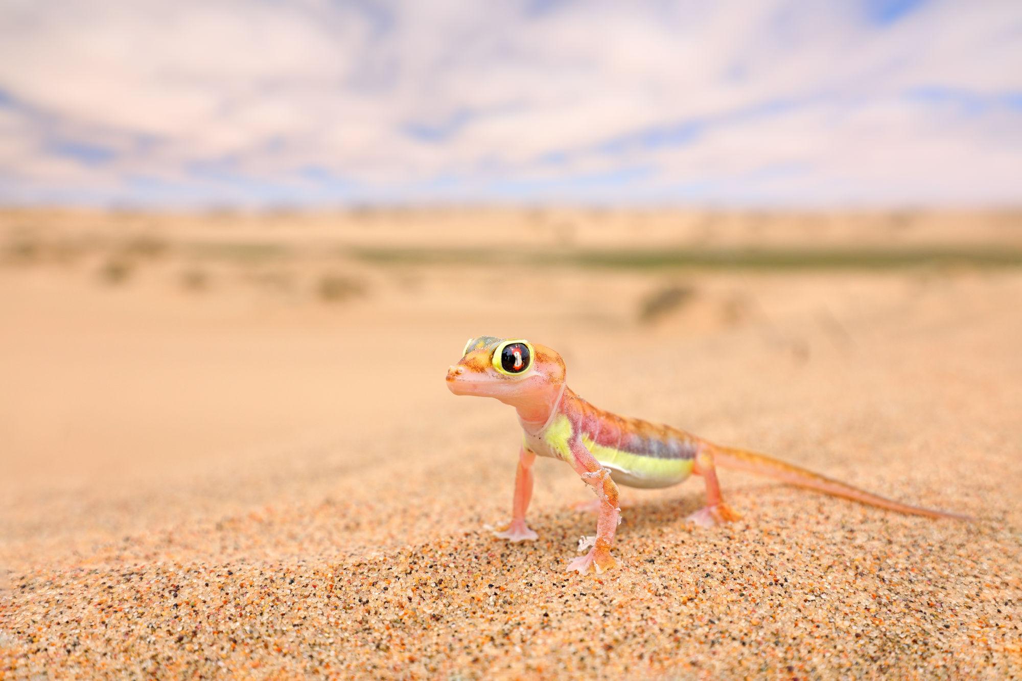 IT Service Berlin Wüste mit Gecko als Symbol für Servicewüste